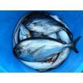 Konzervované ryby